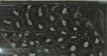 Peříčka černobílá