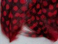 Peříčka černočervená